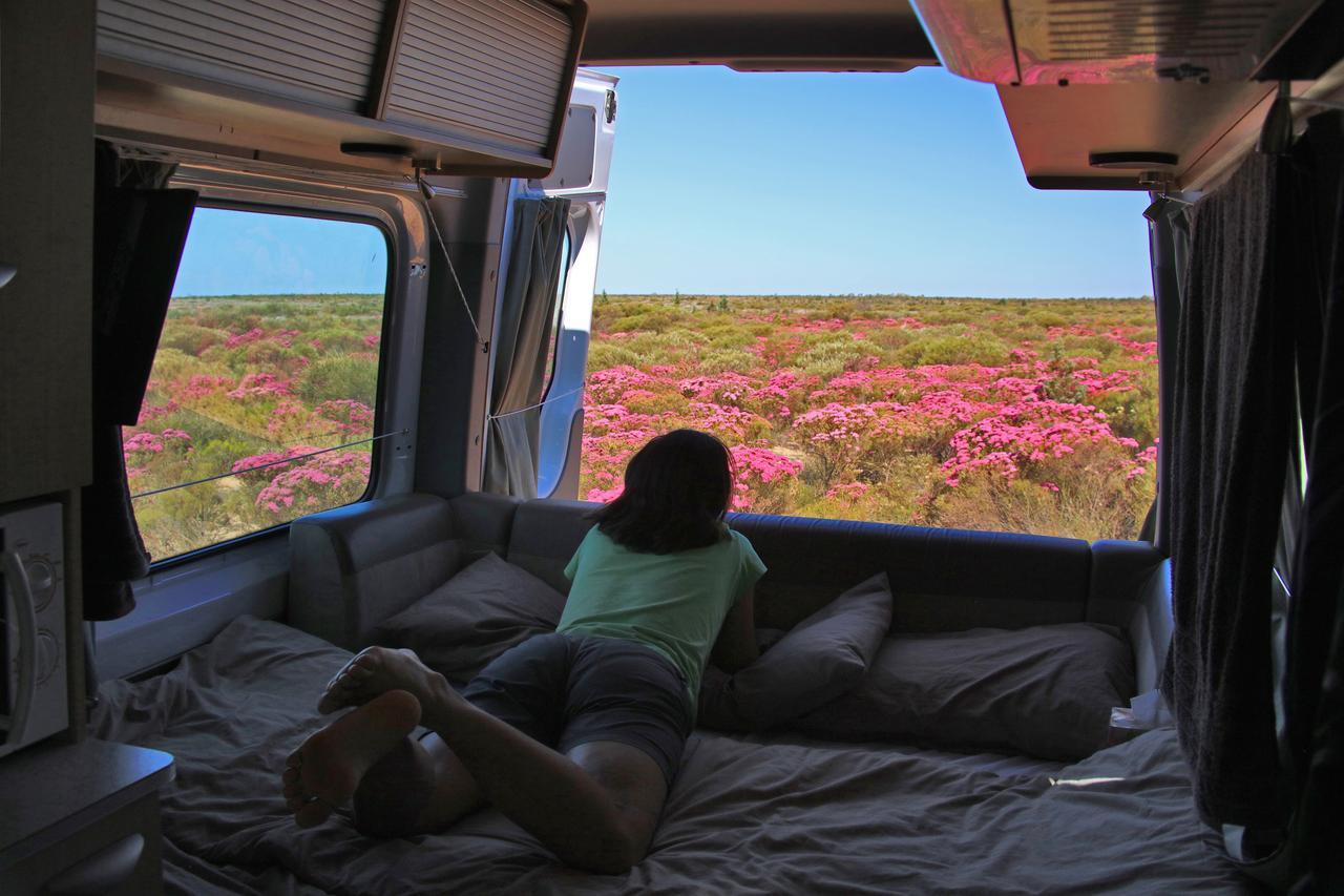 Wildflowers of Western Australia in Maui Ultima Plus
