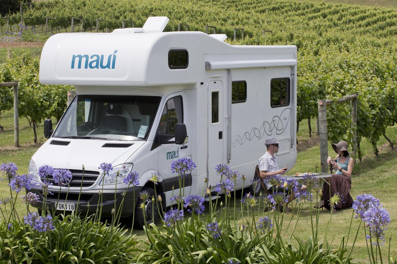 NZ vinyard