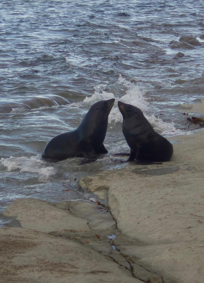 seals at Catlins